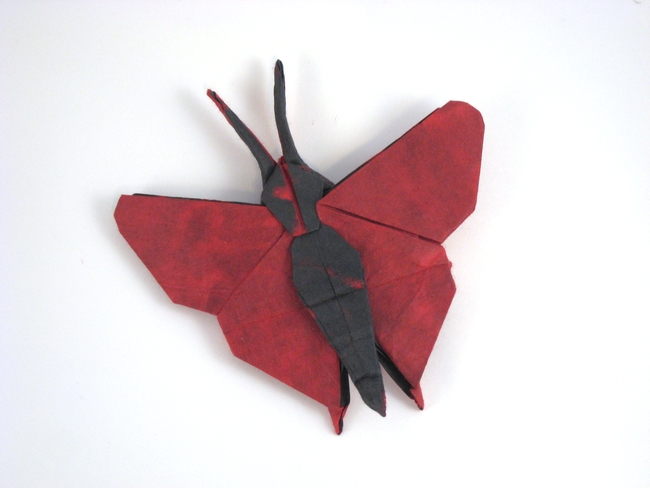 Origami Butterfly - Zoe by Quentin Trollip Folded from a square of mulberry paper by Gilad Aharoni on giladorigami.com