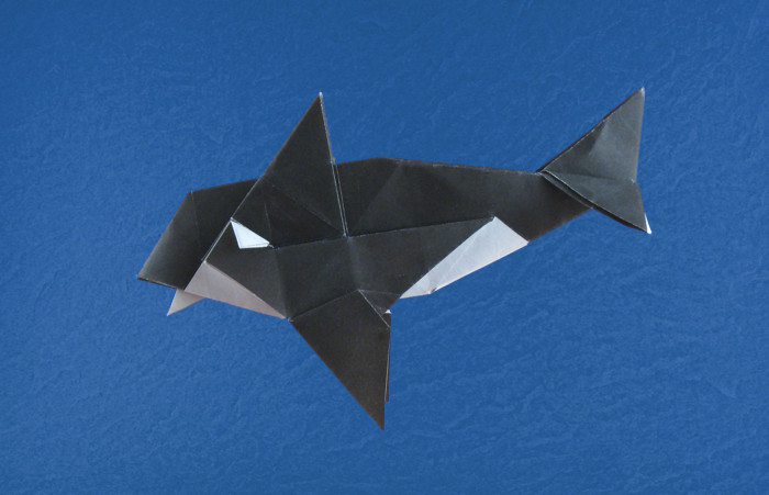 Origami Orca by Fernando Gilgado Gomez Folded from a square of origami paper by Gilad Aharoni on giladorigami.com