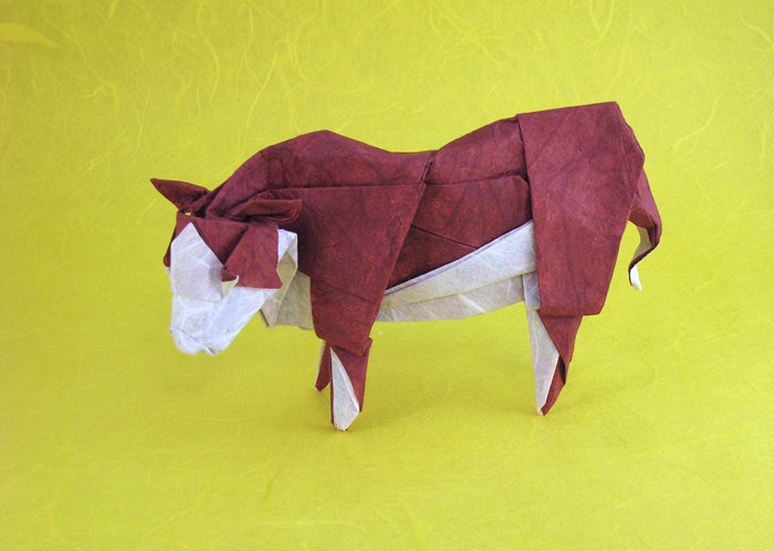 Origami Hereford steer by Roman Diaz Wet-folded from a square of double-sided Unryu paper by Gilad Aharoni on giladorigami.com