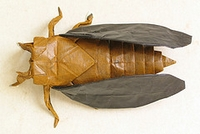 Origami Cicada - Periodical by Robert J. Lang on giladorigami.com