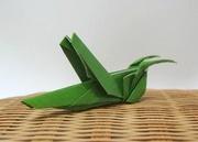 59 Square Origami Grasshopper By Seo Won Seon Redpaper On Giladorigami