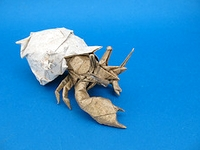 268: Hermit Crab – Setting the Crease | 150x200
